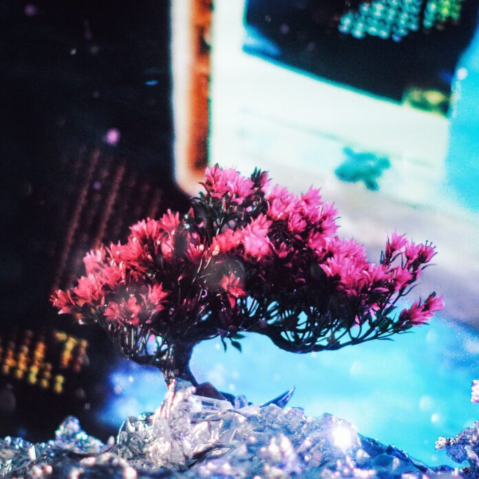 BARDZ - Concrete Jungle, BARDZ Burn Bright EP, new BARDZ music, Black Swan International